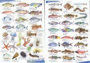 Visherkenningskaart Middellandse zee