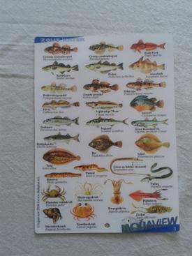 Visherkenningskaart Zout water