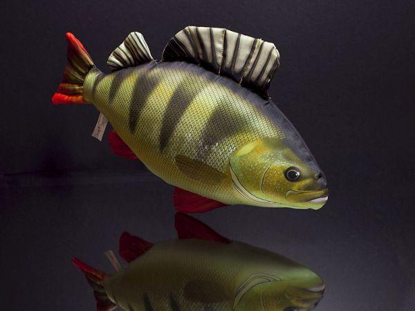 Baars (Perch) 50cm