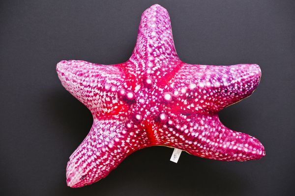 Zeester (Starfish) 50cm