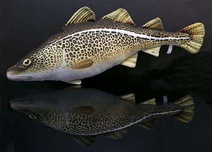 Kabeljauw (Atlantic Cod)