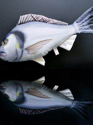 Zeebrasem (Sea Bream)