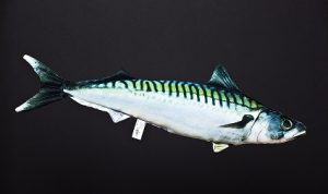 Makreel (Mackerel)