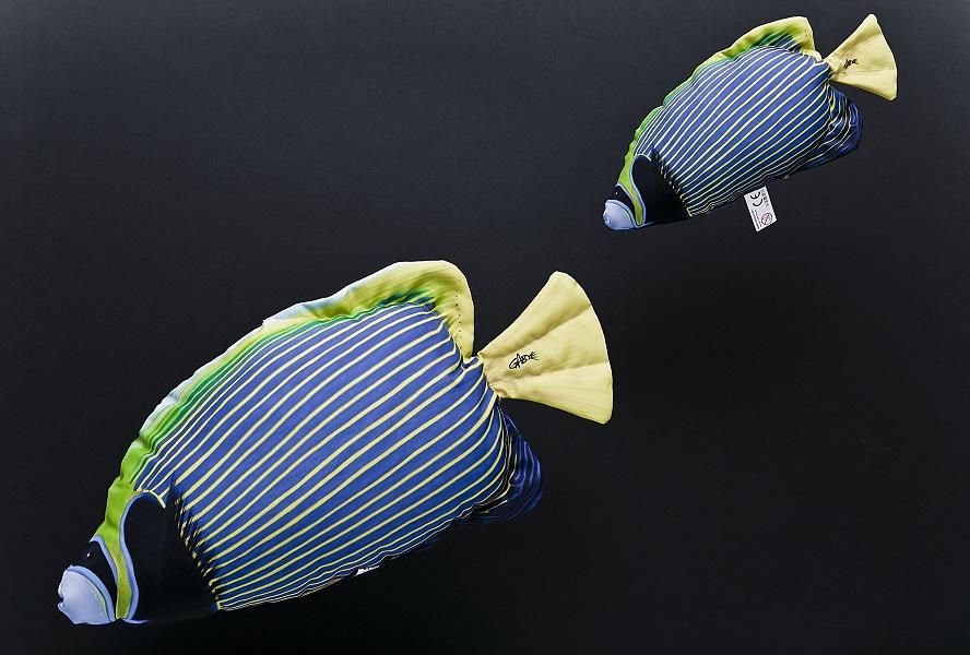 Keizervis (Emperor Angelfish)