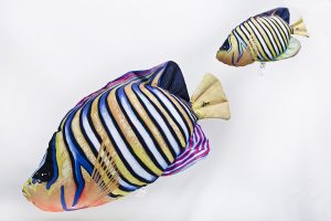 Pauwoogkeizersvis (Regal Angelfish) Knuffel